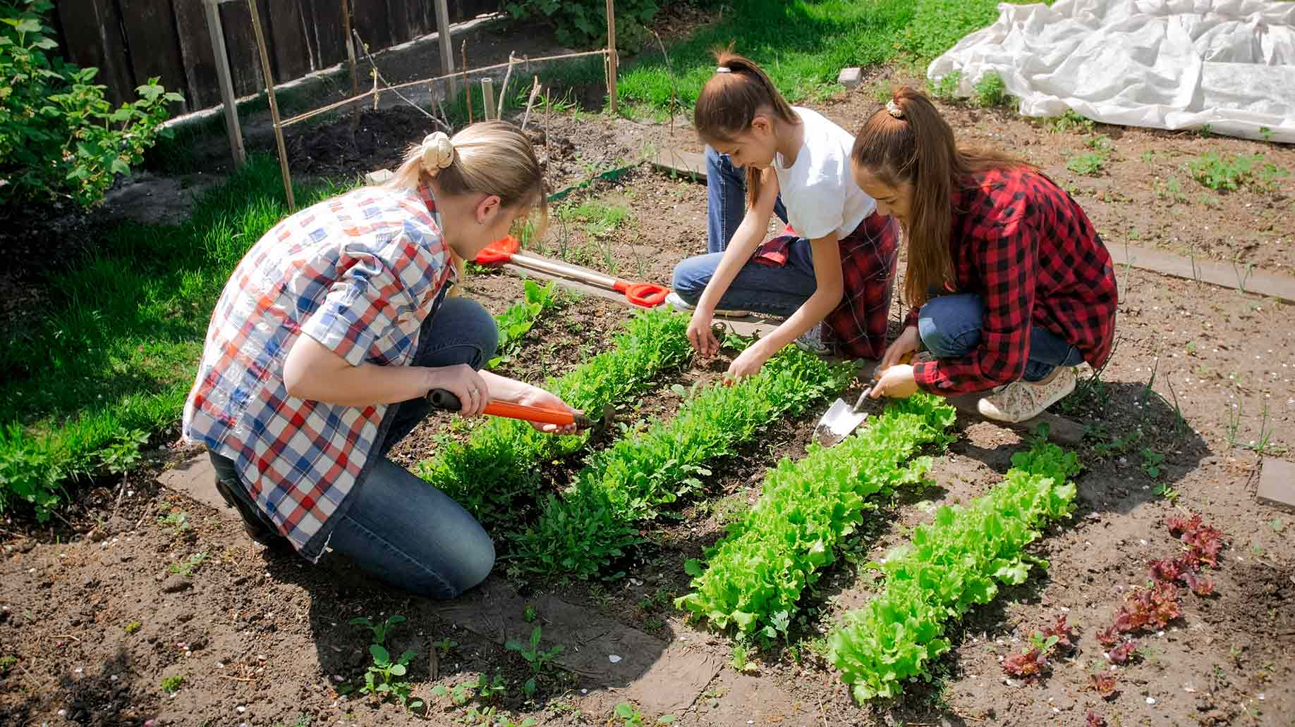 children learning how to plant vegetables at backyard garden