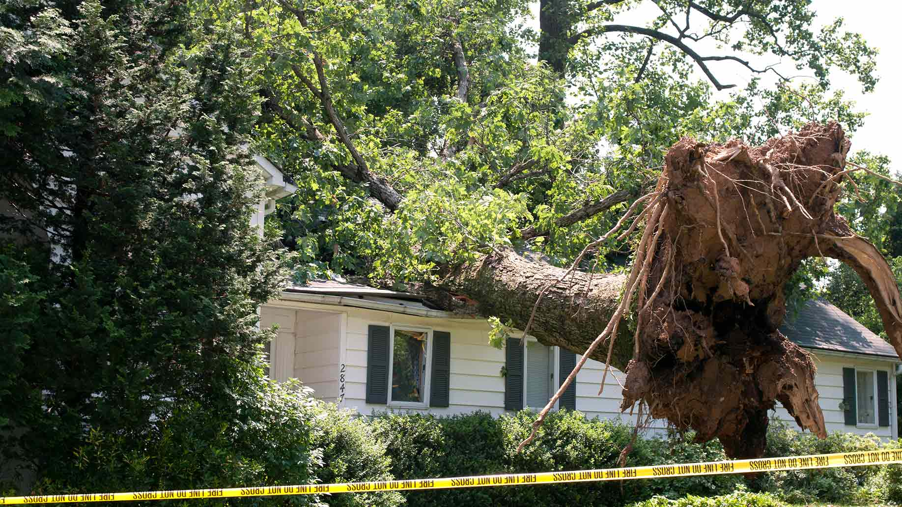 uprooted tree fell on a house after storm