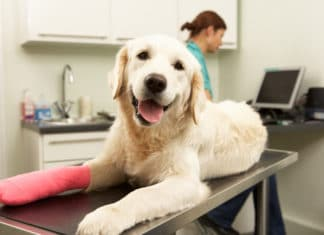 Pet Health Insurance Costs