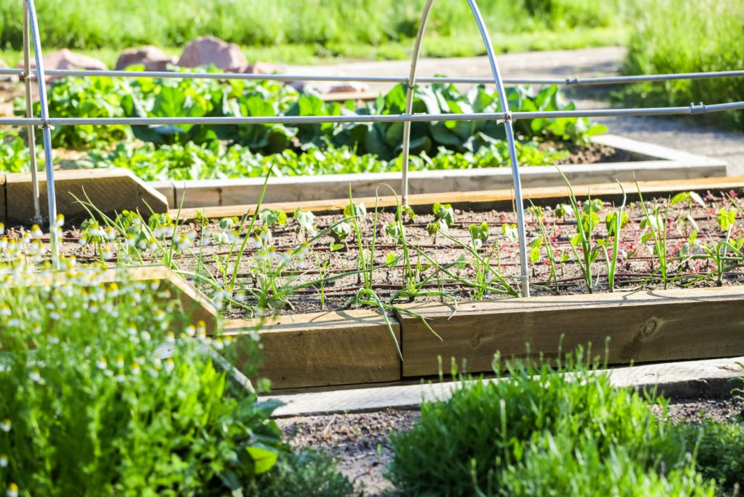 Start Community Garden Benefits