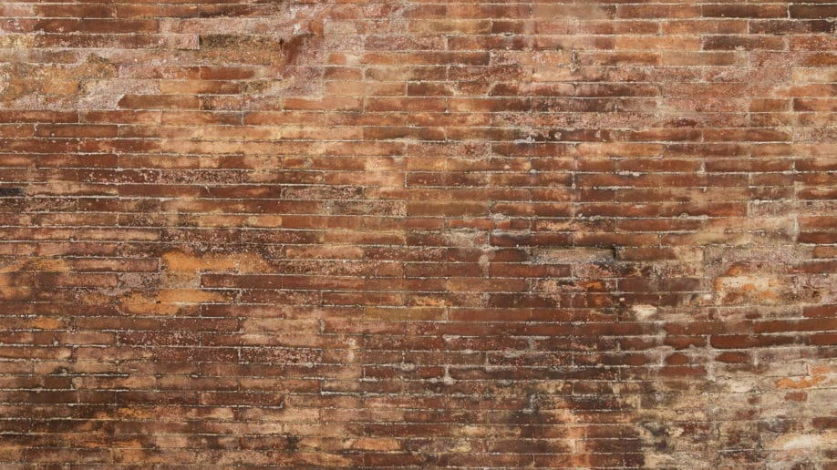 Detect Home Mold Exposure