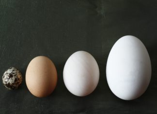 Different Size Eggs White Brown Speckled