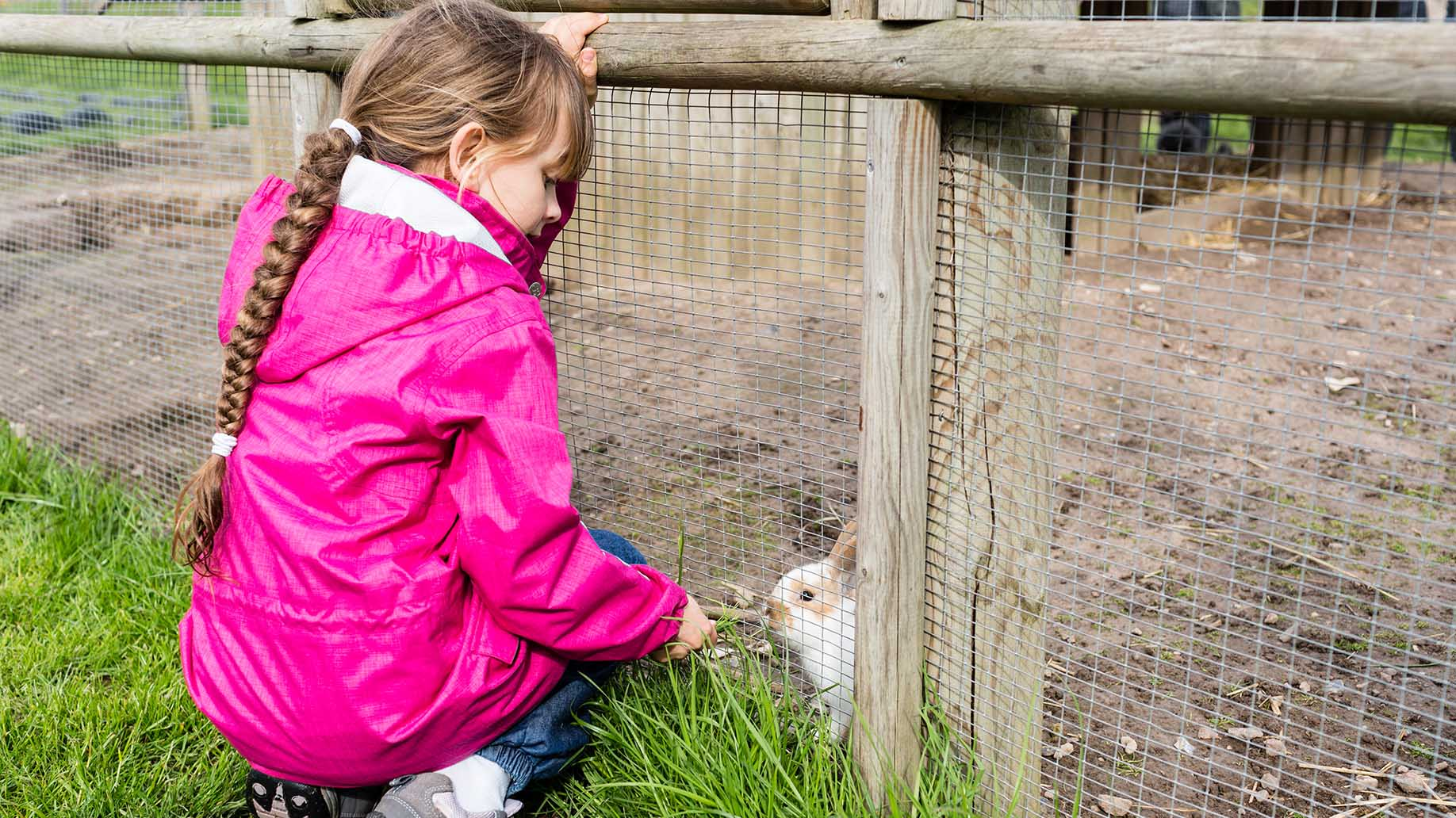 kid feeding rabbit-green grass