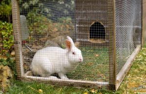 Raising Rabbits for Meat – Cost, Legalities & How to Start Farming