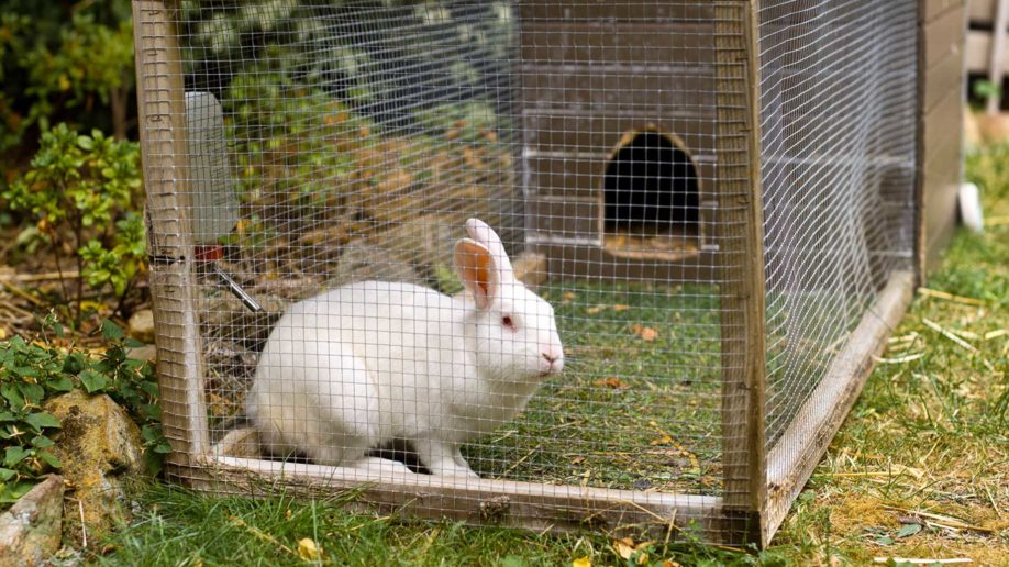 rabbit hutch enclosure suburban
