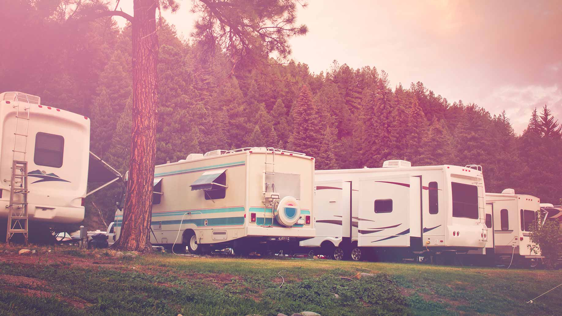 several rvs parked at a campground near a forest