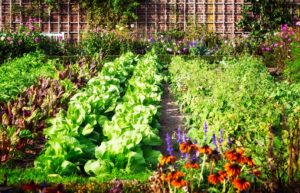 garden full of vegetables and flowers
