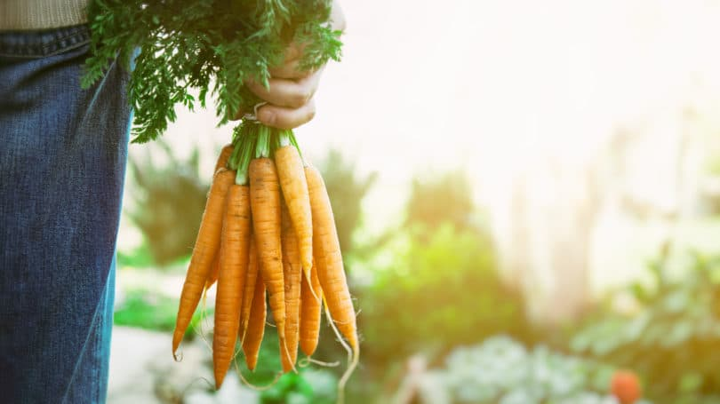 Farm Organic Carrots Farmer