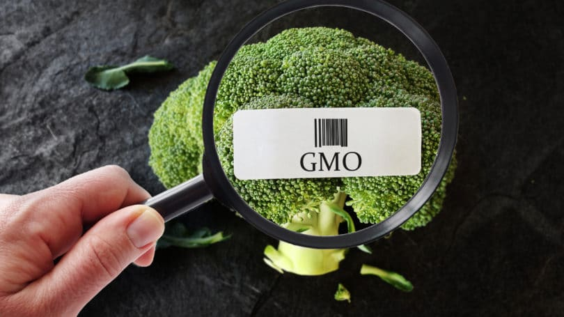 Gmo Broccoli Label Magnifying Glass