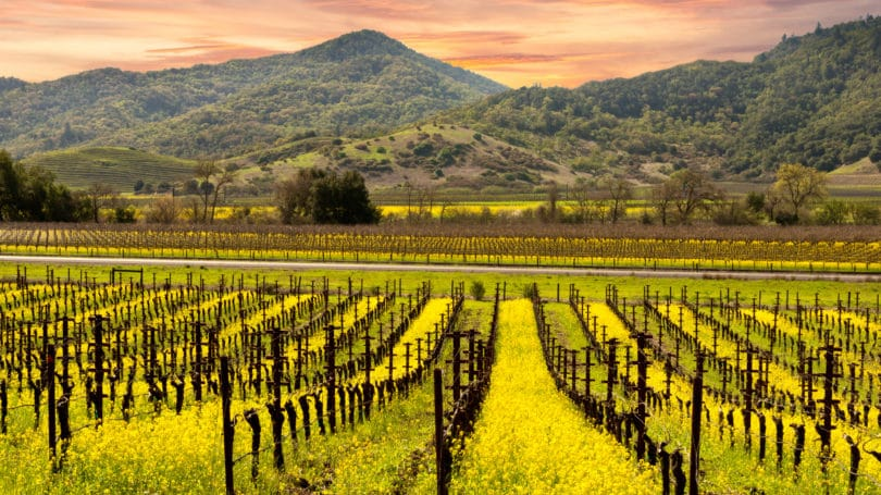 Napa Valley California Wine Country Autumn Vineyards