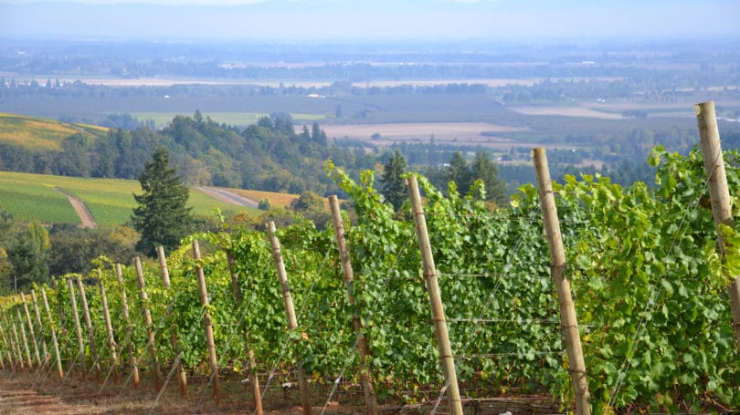 Oregon Pinot Noir Vineyard