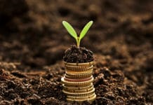 Stack Of Coins Growing Plant Concept Of Growing Money