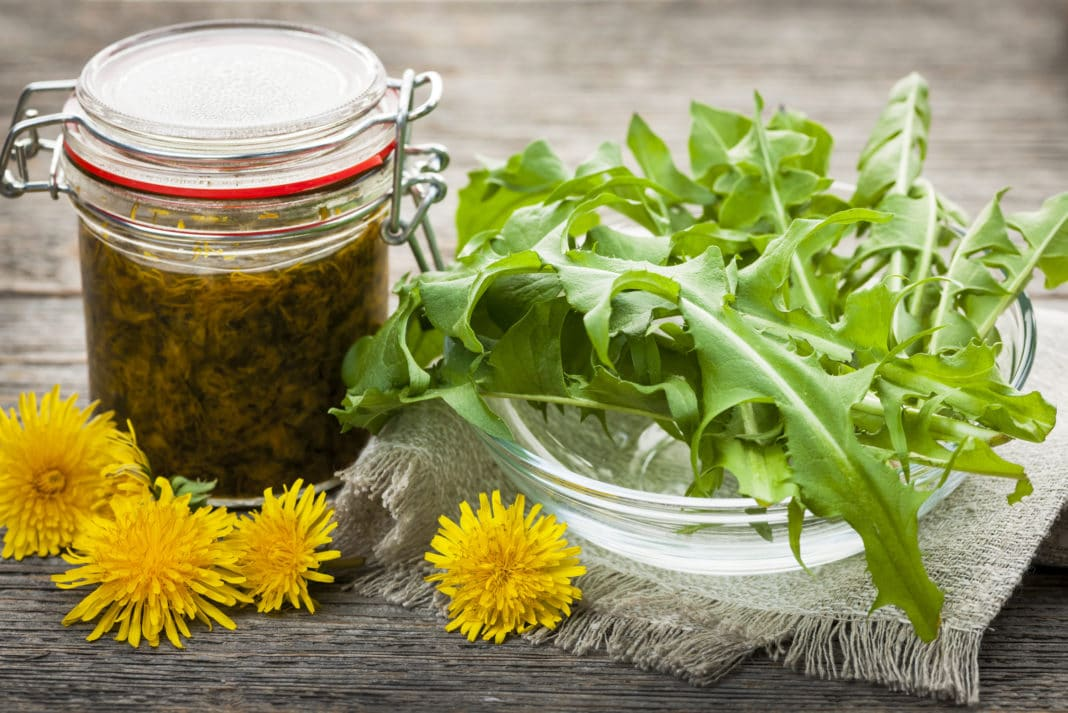 Dandelion Greens Recipes Salad