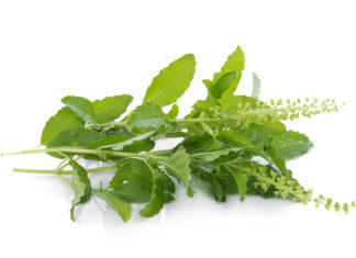 Holy Basil Save Money Improve Health