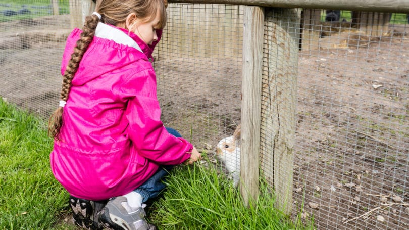 Raising Rabbits for Meat - Cost, Legalities & How to Start Farming