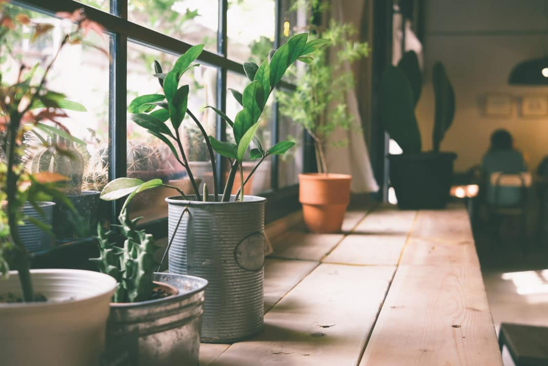 10 HOUSE PLANTS TO DESTRESS YOUR HOME