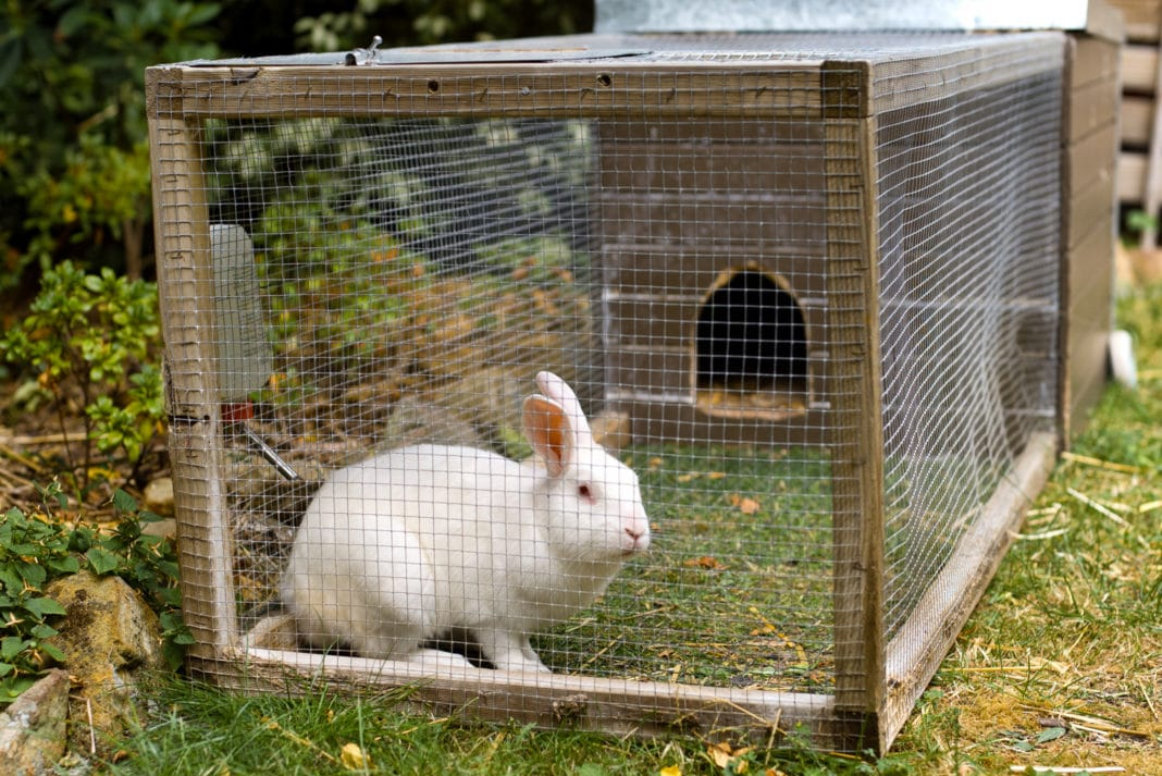 Raising Rabbits For Meat Cost Legalities Amp How To Start