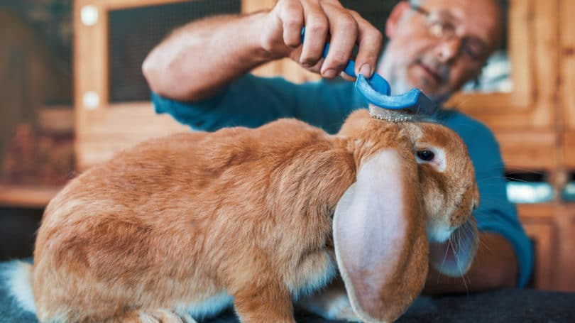 Raising Rabbits for Meat - Cost, Legalities & How to Start