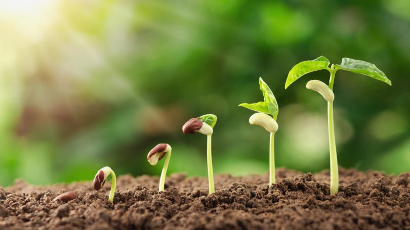 Seeds Planting Growth Plant Soil Sunlight